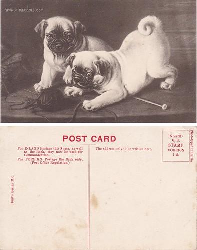 Pugs and Yarn