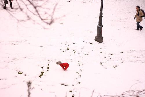 Snow= Fun