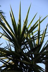 botanico 041 (blum1) Tags: botanico ortobotanico