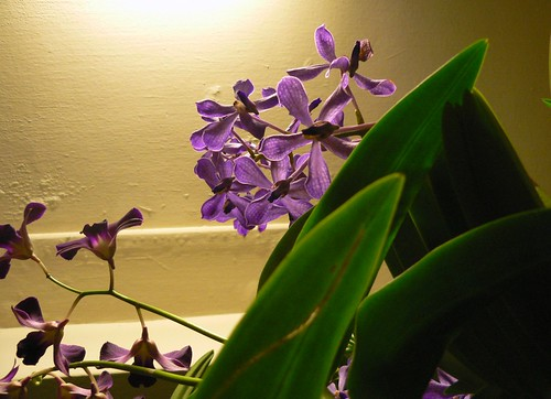 2009 Photo Challenge - Day 36: Purple