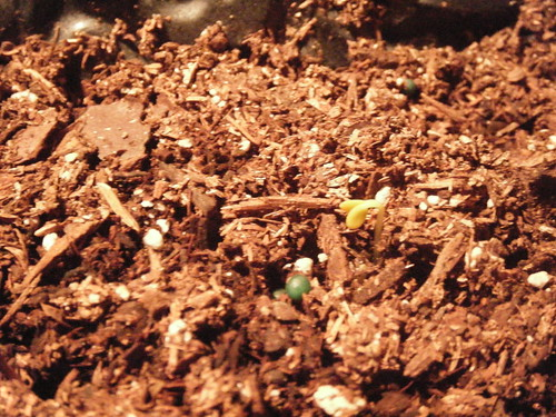 Sprouts coming out of the ground pictures.
