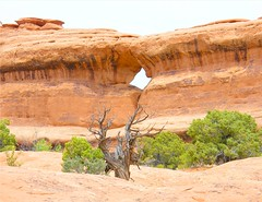 Hole in the Wall (Stanley Zimny (Thank You for 16 Million views)) Tags: park red southwest tree green rock wall landscape utah nationalpark bush hole canyon bryce geology