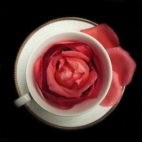Roses 18