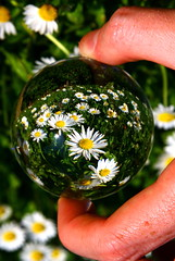 Spring is on its way according to my crystal ball. (kees straver (will be back online soon friends)) Tags: spring sphere future refraction daisys crystalball 30d keesstraver