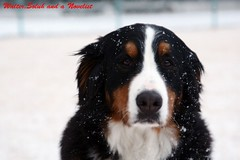 Dad, it's still snowing, I don't wanna go home yet. (waltersoluh) Tags: winter portrait dog snow mwqio