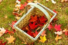 DSC_1568 (mdpayne) Tags: fall boston ma picis october2007