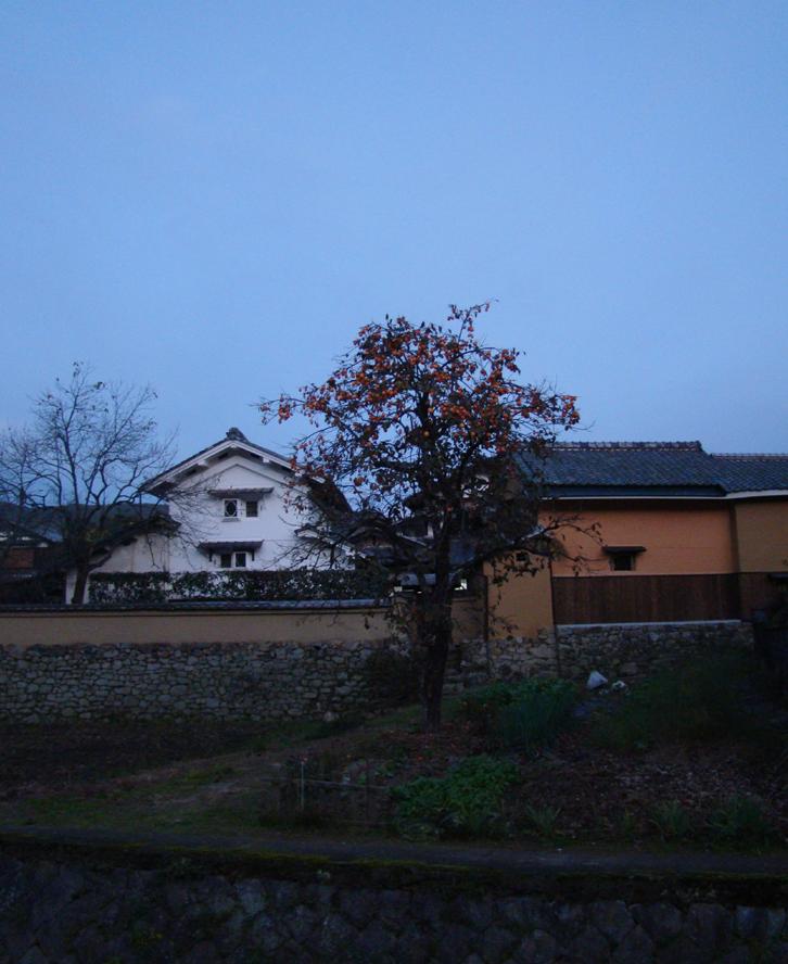 柿 実相院 京都