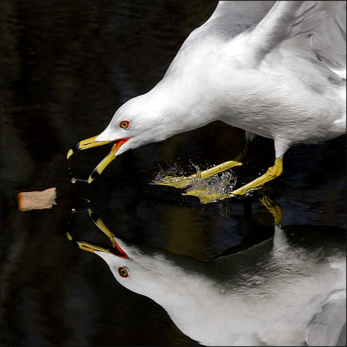 ~ Bait the Birdie ~