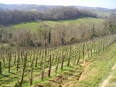 Vineyards at Clos Lapeyre Jurançon