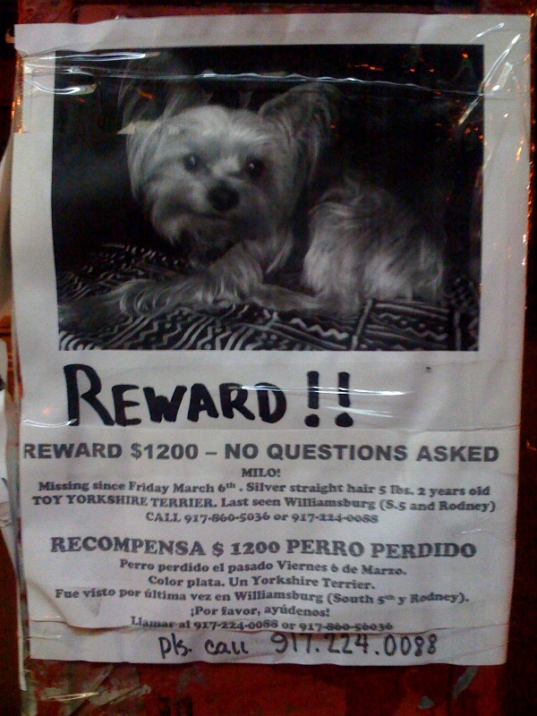 What type of jerk steals somebody's dog? Part II