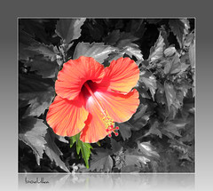 Thank you! (bodulka) Tags: flower macro nature garden thankyou vrt hibiscus priroda naturesfinest cvijece supershot bej fantasticflower fineartphotos golddragon impressedbeauty diamondclassphotographer citrit essentialbeauty theunforgettablepictures wonderfulworldmix goldstaraward flickrestrellas spiritofphotography macrosdenaturaleza specialpictures auniverseofflowers alittlebeauty mallmixstaraward hibiscuswonder