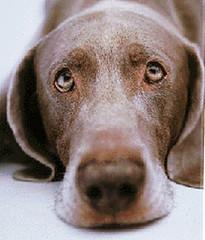 sad doggie