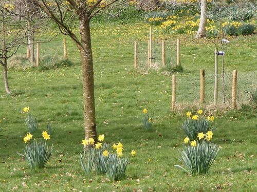 daffodils poem. Daffodils Poem Tone - Page