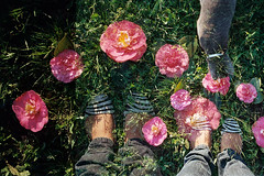 film_569 (LorenaCruz) Tags: pink flower green film feet grass foot error doubleexposure endofroll