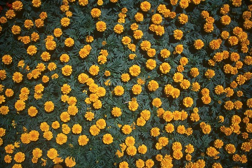 Flowerssss