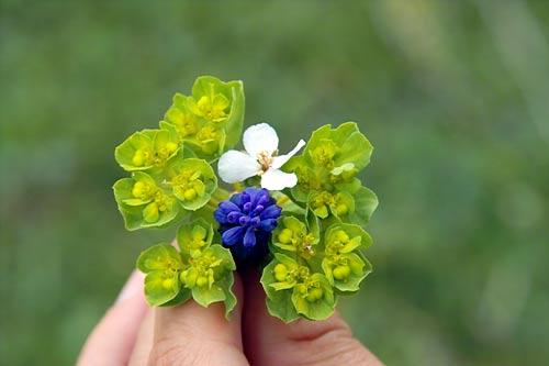 flowers-jerica