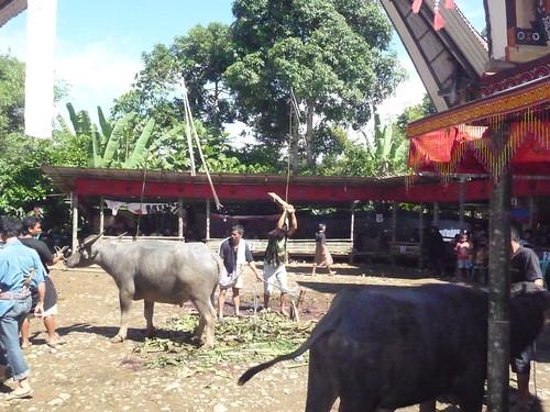Pays Toraja Sud (45)