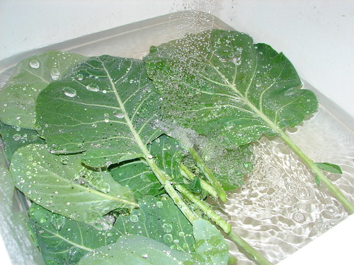 cleaning the collard greens