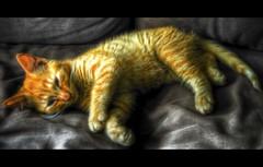 Sleepy Cat (Johan Runegrund) Tags: orange cat photoshop nikon sofa sleepy hdr d40 abigfave