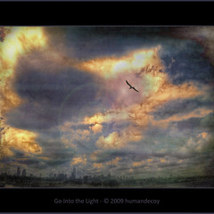 Go into the Light (Explored) (Humandecoy - back) Tags: sky texture netherlands clouds rotterdam seagull wolken explore olympuspen meeuw ps4 justimagine rotterdamskyline artistictreasurechest magicunicornverybest magicunicornmasterpiece olympusep1 topadjust smallsprigoffractaliustospiceupselectedareas
