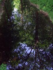 Nijmegen (by_irma) Tags: trees reflection tree green nature water nijmegen bomen groen natuur boom gelderland reflectie oostkanaaldijk vossendijk