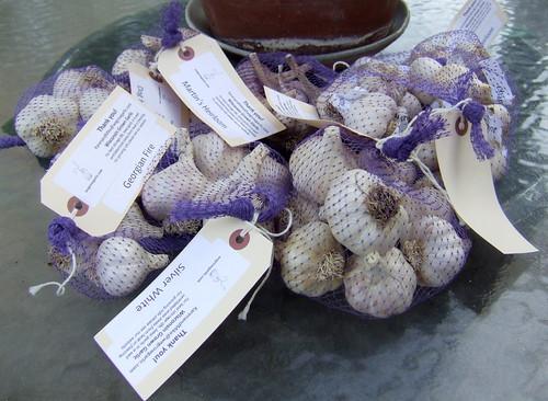 garlicstash2