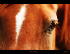 Horse (Rachel :-)) Tags: camera horses horse field digital canon eos 350d feld pferde pferd gelding rrw wallach partarab bolsovercastle270809