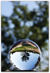 Tree in glass (tomebug) Tags: refraction glassball texascanon40dps4