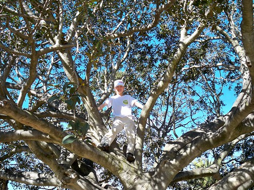 Climber in a Tree 525