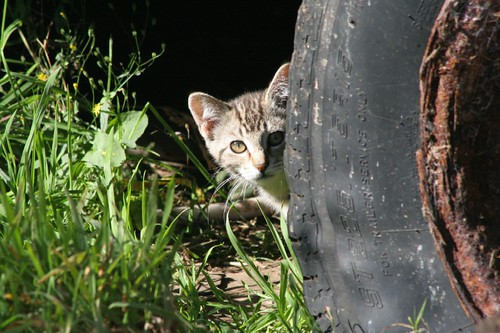 Little Tabby Cat Hides From Me