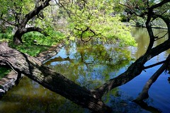 Reflejo / Reflection (Cristina *Superann*) Tags: trees reflection water argentina agua buenosaires rboles reflejo mywinners anawesomeshot panasonicdmclz8 micarttttworldphotographyawards