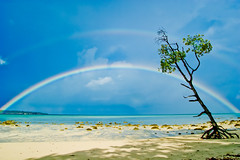 rainbow islands (green.pit) Tags: travel blue india tree beach strand rainbow reisen asia asien paradise sony roots double palm explore topf100 frontpage indien regenbogen havelock gettyimages andaman wurzeln nicobar a350 dslra350 sonyalpha350 pitgreenwood
