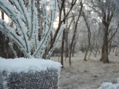 Hoar Frost in Scotland