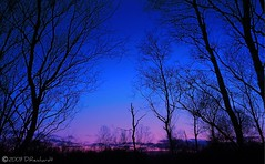 Moorland (dyed blue) (D.Reichardt) Tags: pink blue trees winter sky nature germany landscape evening abend europe dream silhouettes moorland bokel aplusphoto goldstaraward