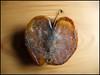 rotten apple (sulamith.sallmann) Tags: food apple fruit essen eat waste rotten frucht apfel alimentation pomme nutrition obst nahrung schimmel lebensmittel gesund nahrungsmittel speisen fäulnis ernährung verwesung apfelhälfte verfault challengeyouwinner sulamithsallmann ernähren fäule trashbit fu0 nourissment