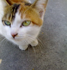 Mama (beautifuliris) Tags: cat mama straycat