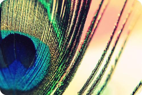 3219660547 f1ef0f09a7 - �ok Renkli Avatarlar