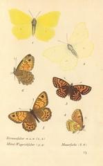 papillons d 9