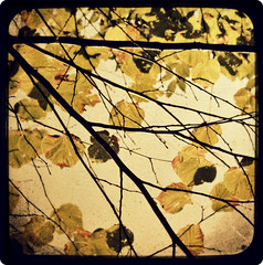 Behind foliage (Mr.PartyHut ) Tags: old artwork painted appennino viewfinder secco ttv secchi montefalcone platinumheartaward natureoutpost marcomatteucci
