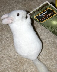 Book Thief! (wisely-chosen) Tags: book chinchilla lightning february 2009 picnik stealing hgwells thetimemachine pinkwhitechinchilla