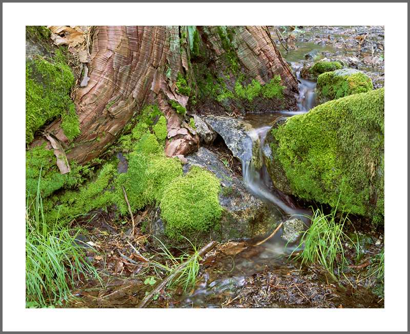 Cedar Runoff, Photograph by Rick Knepp, All Rights Reserved