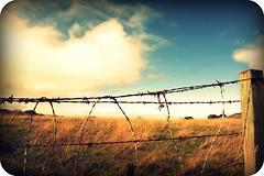 Fence (Jesse☮Mari) Tags: california wood blue sky grass clouds fence wire post carmel barbwire picnik monasterybeach