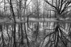 Arborous Reflections (taylorphotography) Tags: trees blackandwhite detail water lines contrast digital canon iso100 evening mood curves creepy burning missouri canon5d 1740mm relfections cs3 warrensburg dodging arborous parabella knobknosterstatepark olderbutnotold artofatmosphere