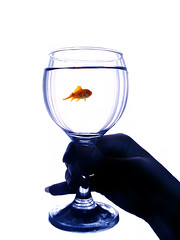Happy Nouroz 1388 (DeLaRam.) Tags: fish hand iran edited explore iranian zoroastrian سفید باده bexploreb دلارام ایرانباستان اهورامزدا ایرانما happynowruz نوروز88 29esfand87 موبد نژادایرانی 3747ایرانی ماهـــی نـــــــــــــــوروزبــــــاستـــانــــــــــــــی