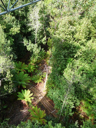 View of Paths at Ground Level from the Tahune Airwalk