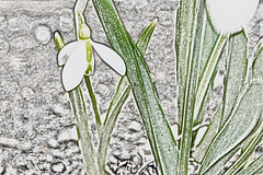 snow drop pencil