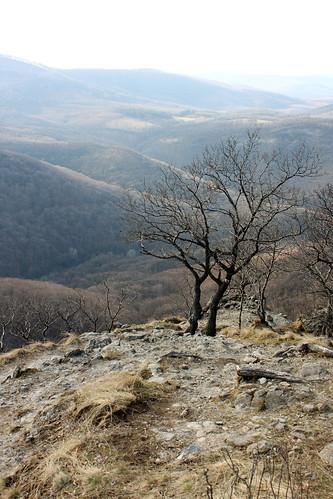 Dunakanyar, 2009. 03. 21. 0021