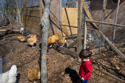 Baby O and chickens