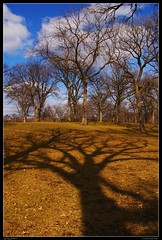 Spring Shadows (FlappinMothra) Tags: park blue shadow sky minnesota digital spring oak pentax minneapolis falls dslr hennepin minnehaha dapa k100d colorphotoaward platinumbestshot