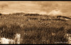 Dune Deer (Craig - S) Tags: sky grass sepia sand michigan dune deer ludington ultimateshot proudshopper